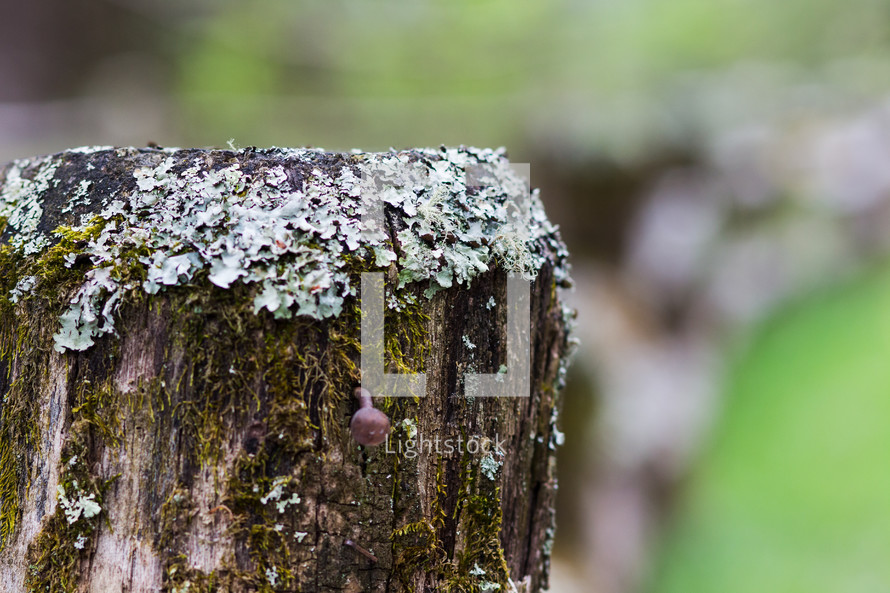 moss and lichen on a fence post