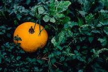 a pumpkin in green ivy