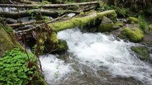 stream of water passing through moss covered limbs and branches