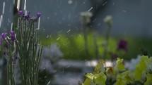 falling rain on spring flowers