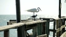 egret and seagull on a pier