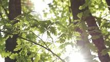 Sunny day. Foliage.