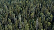 aerial view over a forest