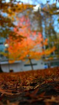 Fall leaves cover the ground, with trees in the background.