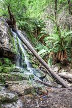 waterfall in Tasmania jungle