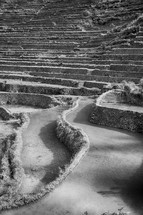 terraced fields for rice cultivation