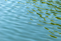 ripples in pond water