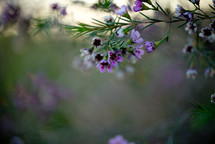 purple flowers and blurry background