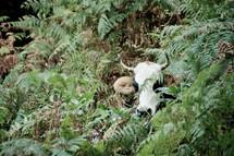 cow in a jungle