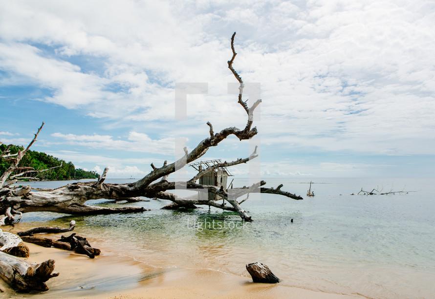 a fallen tree along a shore