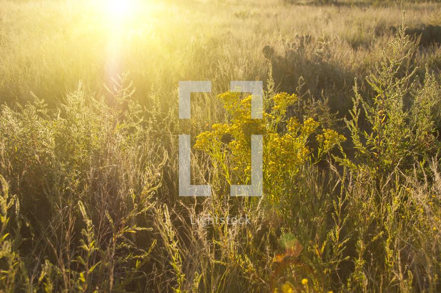 dense lush field
