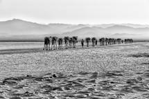 caravan of camels across a salt lake
