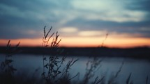 Sunset through the grass (full speed, 24fps)