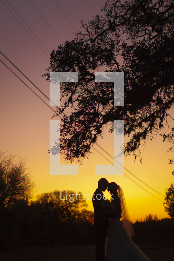Silhouette of a recently married couple beneath an oak tree