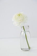 white flower in a clear vase