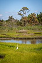 White bird in marsh wetland near water and trees