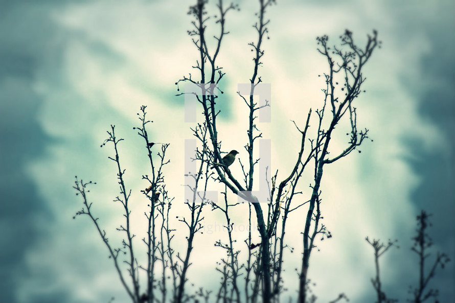 birds in a leafless winter tree
