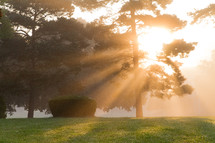 morning fog and sunlight in summer