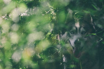 A husky looks on through green foliage.