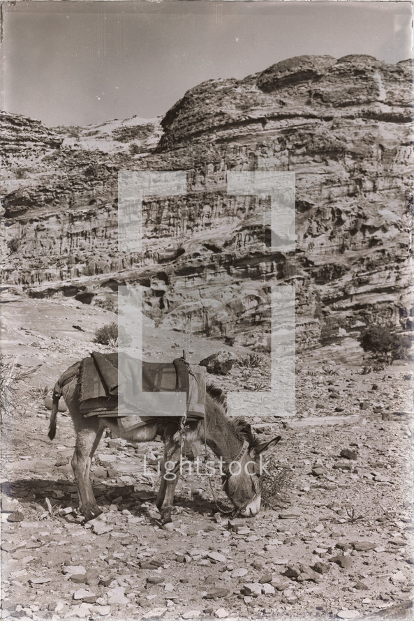 donkey on a desert mountainside