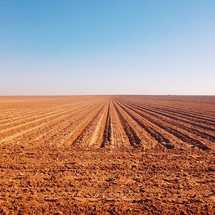 rows in a plowed field