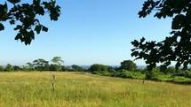 a birdhouse in a field