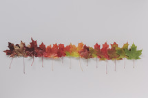 colorful fall leaf display on white