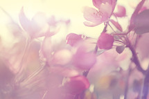 An out of focus abstract styled sunny spring background