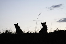 Silhouette of animals in a field at dusk.