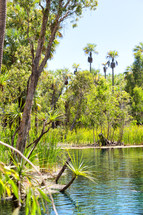 palm trees in a jungle and lake