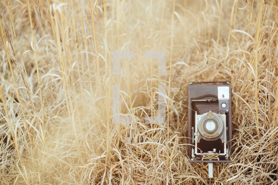 vintage camera in tall brown grasses