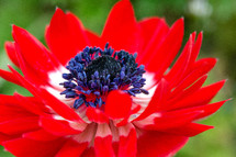 red floer