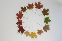colorful fall foliage in a circle