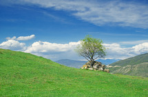 Solitary tree on green, rolling hills under a clear blue sky.
