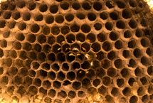 Wasp nest.