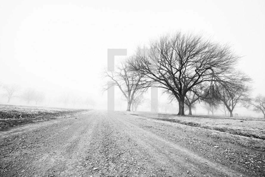 fog over a rural gravel road