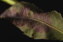 purple and green leaf