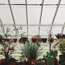 A greenhouse full of plants.