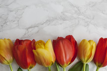 tulips on marble