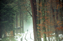 man and dog on snowy trail through a forest