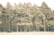 trees in a forest and picnic table in the clearing