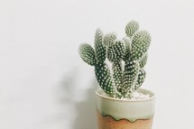 potted cactus plant