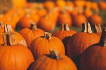 Pumpkin patch.