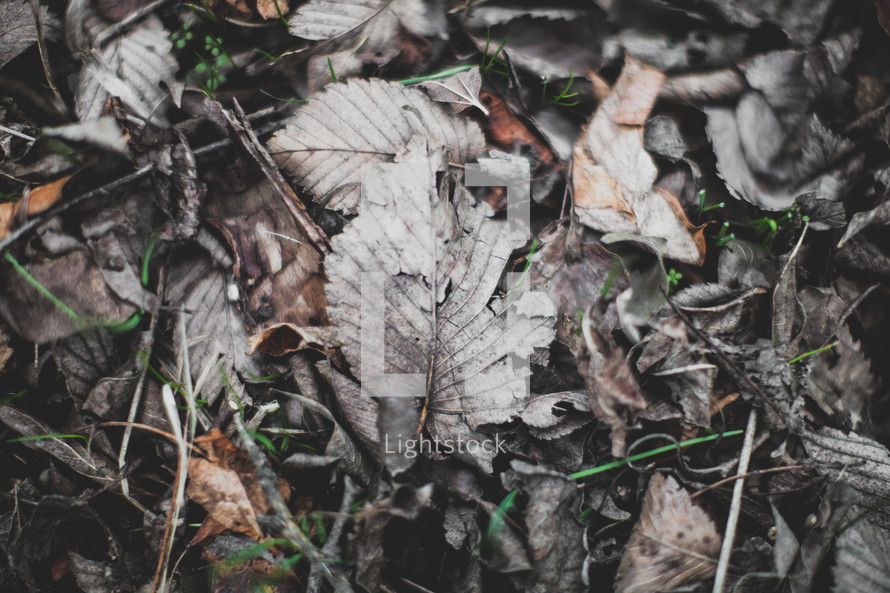 dried dead leaves