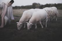 shepherd watching over his flock