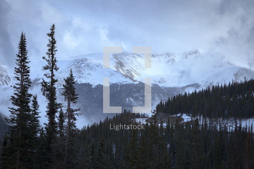 Snow capped mountain landscape near evergreen trees in Apraho National Forest