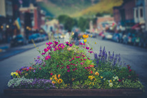 flowers in a flower box on a downtown sidewalk