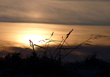 sunrise over winter grass