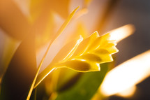 warm sunlight on a bromeliad