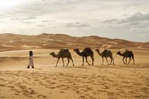 guy leading camels